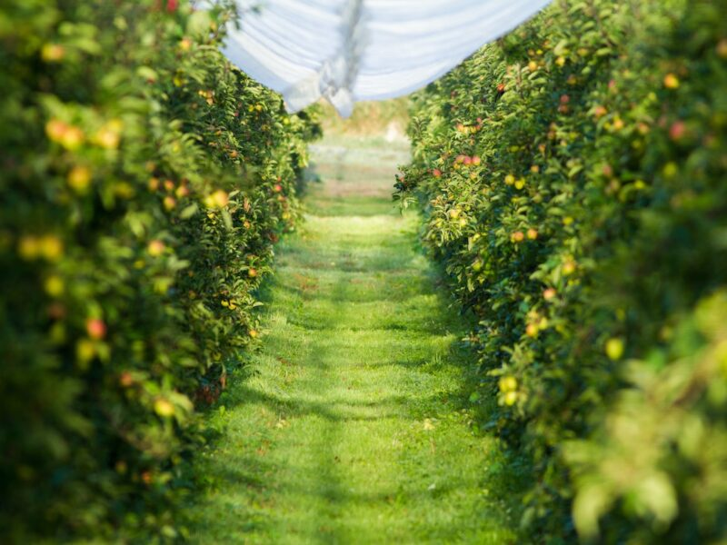 SFF Futures backs hort tile drains and water quality research