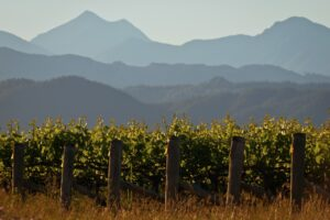 NZ Winegrowers, DairyNZ make Biosecurity Awards shortlist