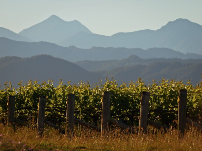 Poor yields prompt Marlborough viticulture field day