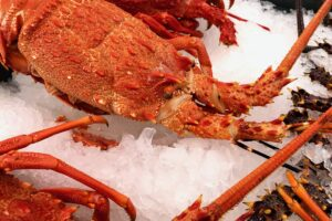F&B exports to China: lobster leaps as meat, dairy enjoy strong H1