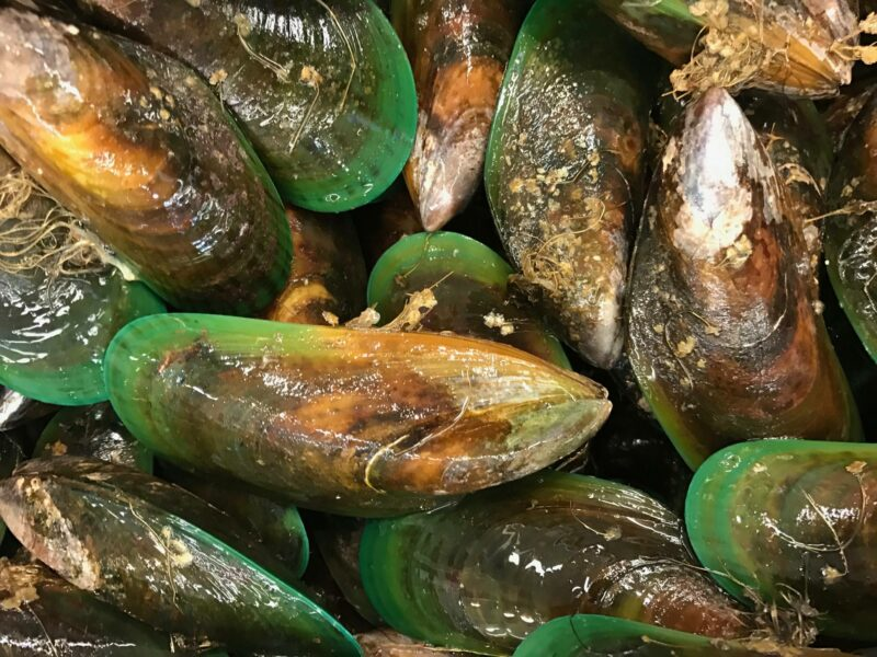 People warned off raw mussels – again