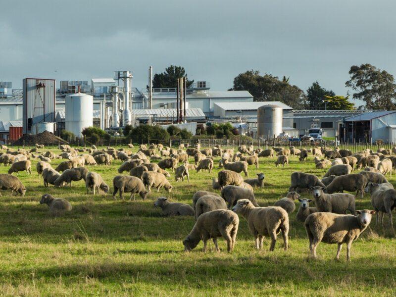 Sheep meat exports reach $4bn – Stats NZ