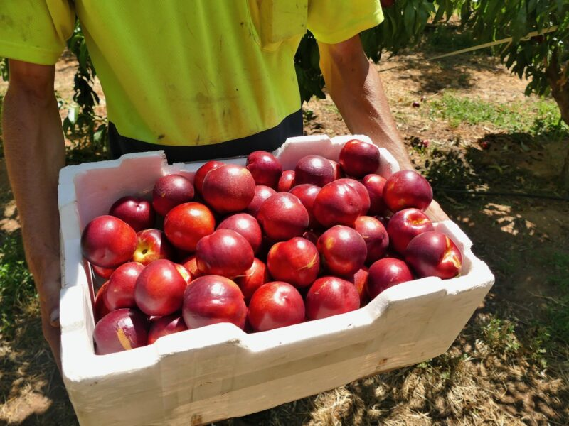 Huge losses ahead for apple and pear sector – NZAPI