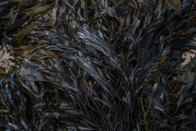 Is seaweed the next superfood?