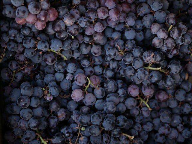 Martinborough gets new wine, gin spot