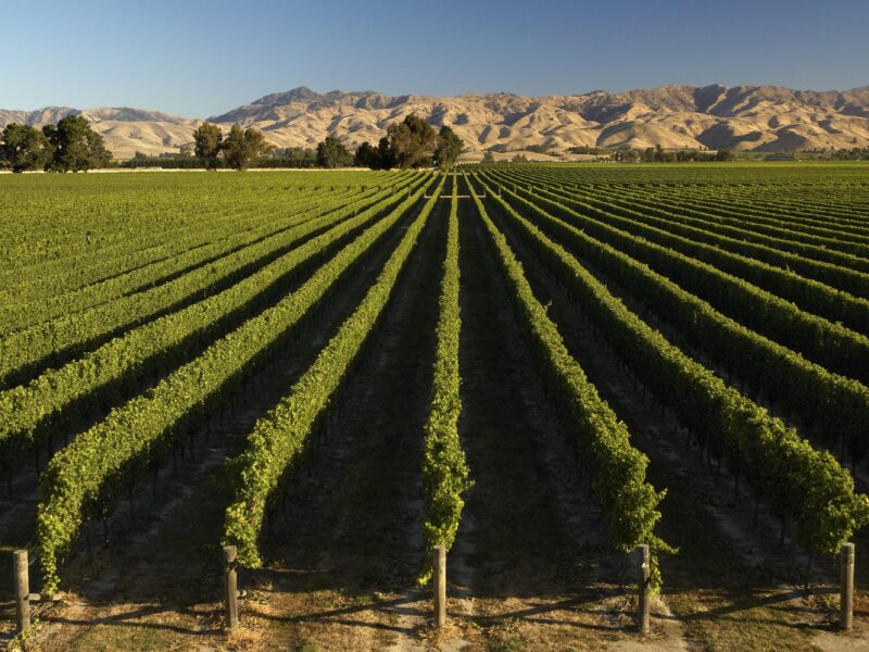 NZ wine exports fall for first time in 26 years