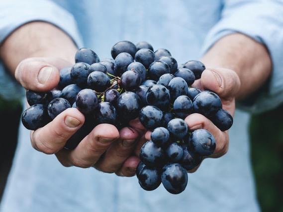 Smaller harvest means tough decisions – NZ Wine