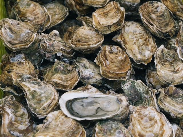 Industry on alert as oyster parasite discovered in Foveaux Strait
