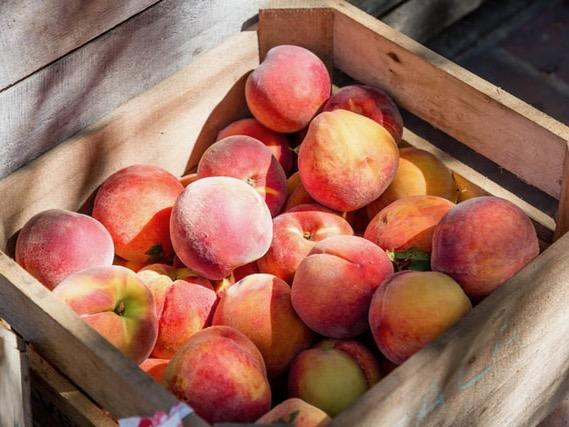PGF invests $825k in Northland organic farm initiative