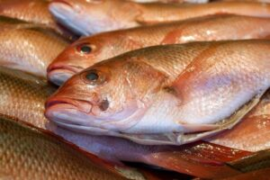 Consultation opens for April 2021 fishery changes