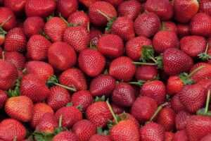 Strawberry prices crushed 43% as exports fall