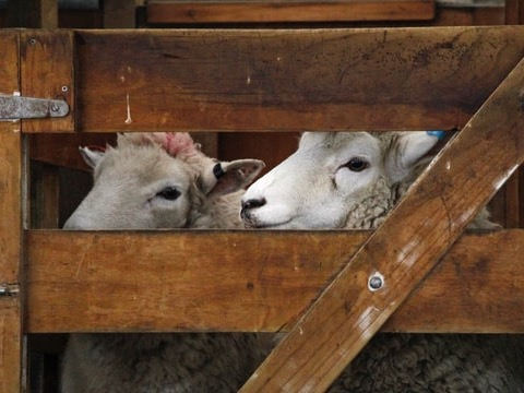 Covid-19, weather woes, M Bovis: Beef + Lamb NZ wraps 2020