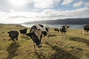 Dairy farmer fined $30k for labour breaches