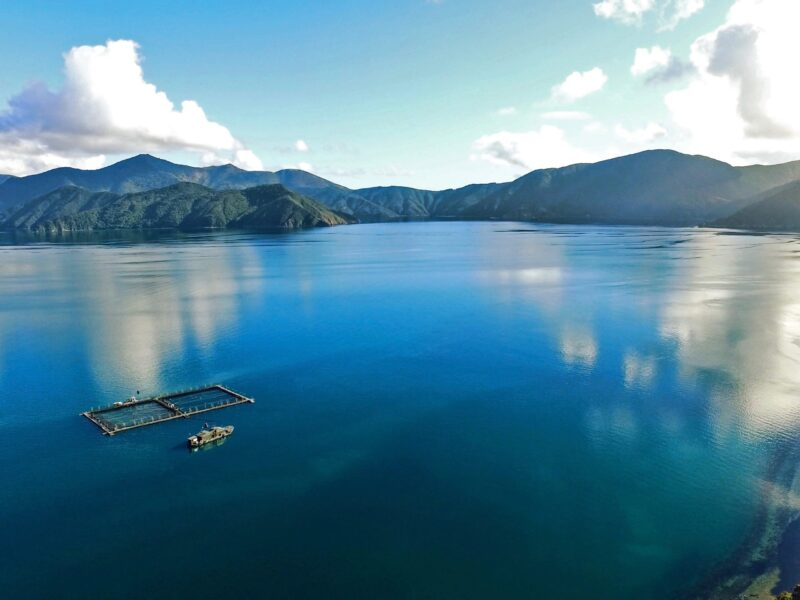 Covid contingencies push NZ King Salmon into the red