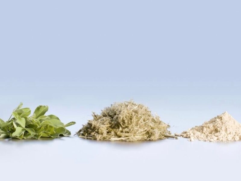 Leaft launches $20m plant protein programme with SFF Futures backing
