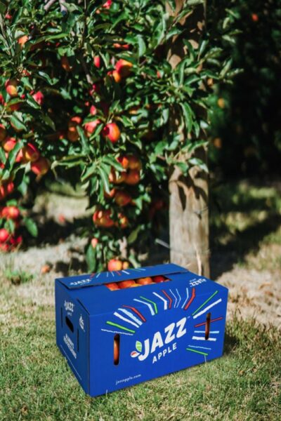 T&G Global ships first lot of JAZZ apples