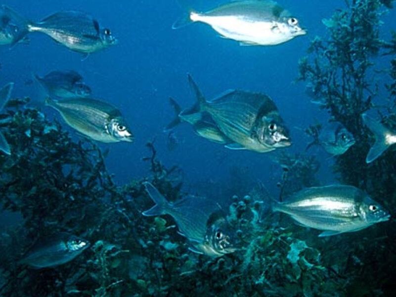 Fisheries management report gets lukewarm industry welcome