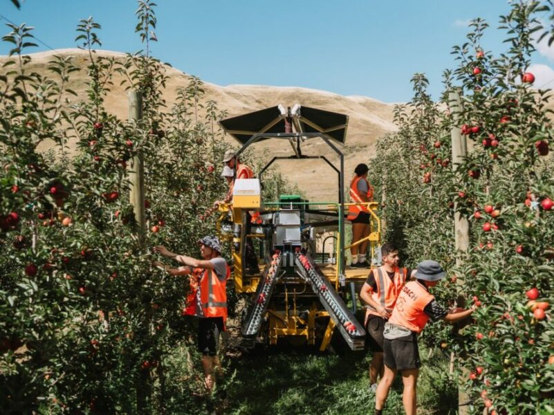 T&G boosts automated platform picking