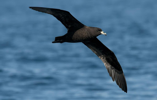 Fishing firm reports endangered bird catch
