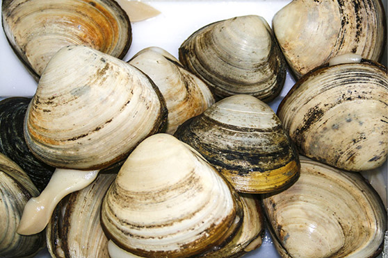Southern Clams debuts website to showcase sustainability
