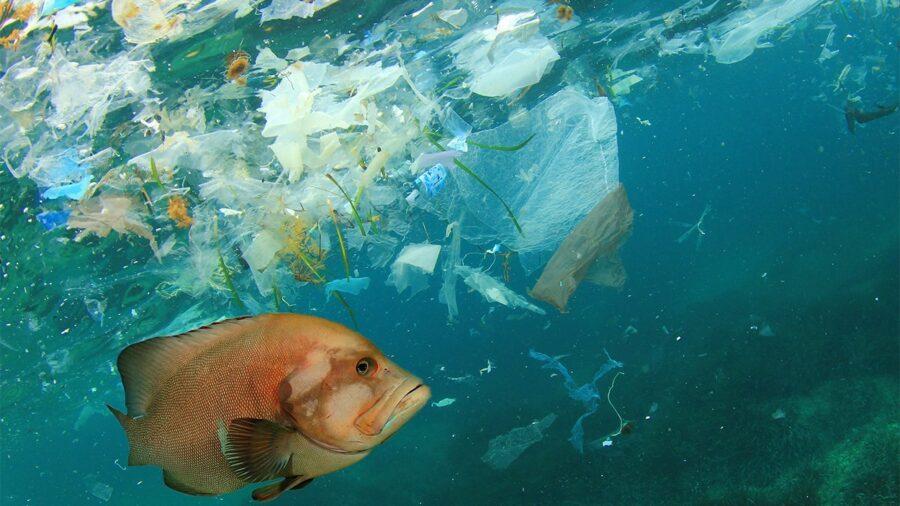 A quarter of fish in Hauraki Gulf have microplastics in their guts – NIWA