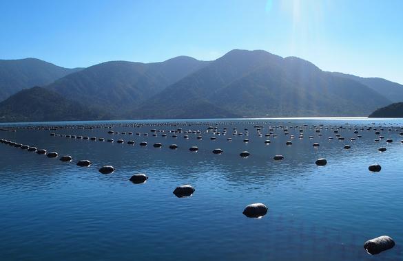 Trial underway to reduce runaway mussel floats