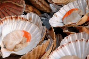 East Coromandel scallop fishery to close for two years