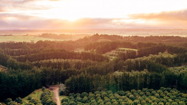 Northland avo orchard up for sale