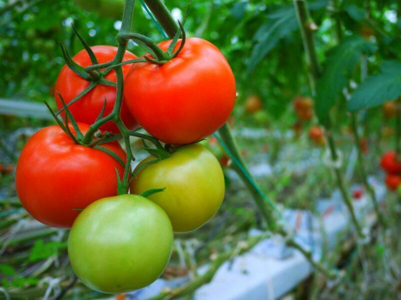Fresh produce Tech Innovation Awards finalists named