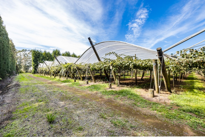 Seeka puts kiwifruit assets up for sale