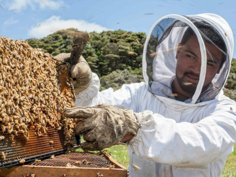 Apiculture conference to address climate change, honey market