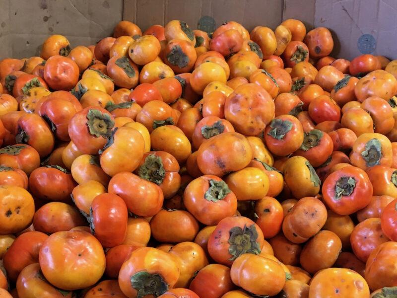 Avocados on track for smashing season as persimmon sales perk up