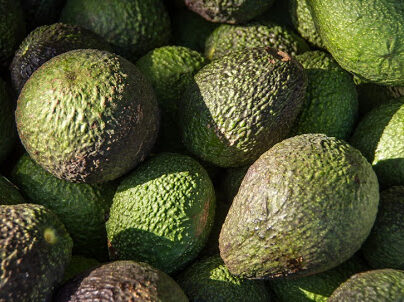 Man jailed for 113kg of meth hidden in avocado pulp