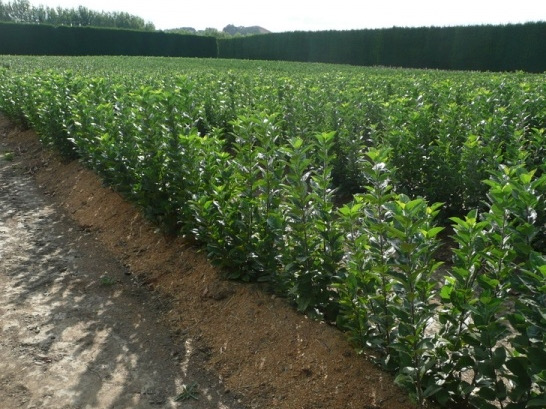 Genesis Private Equity deepens roots in hort sector with new investments