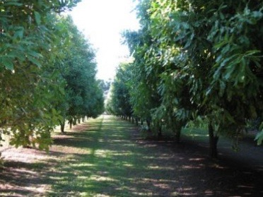 HVN invests in NZ macadamia nuts project