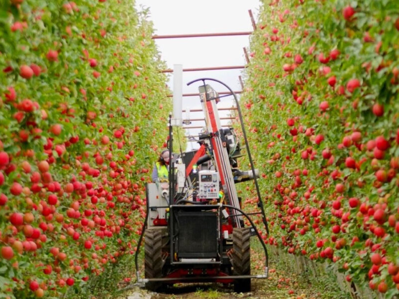 """PI Summit 2021: Automated orchards """"still 15-20 years away"""" – NZ Apples & Pears"""