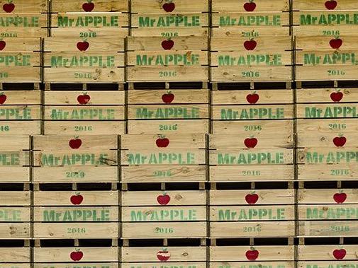 Scales' Mr Apple CEO banks $416k