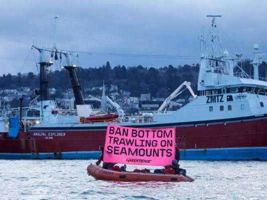 Greenpeace targets Talley's ship in bottom trawling protest