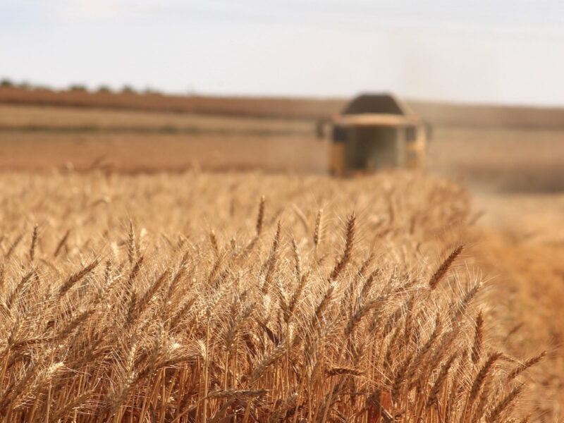 IPCC: Crops, livestock, fisheries at risk from climate change