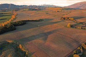 Terra Vitae Vineyards dips into the red